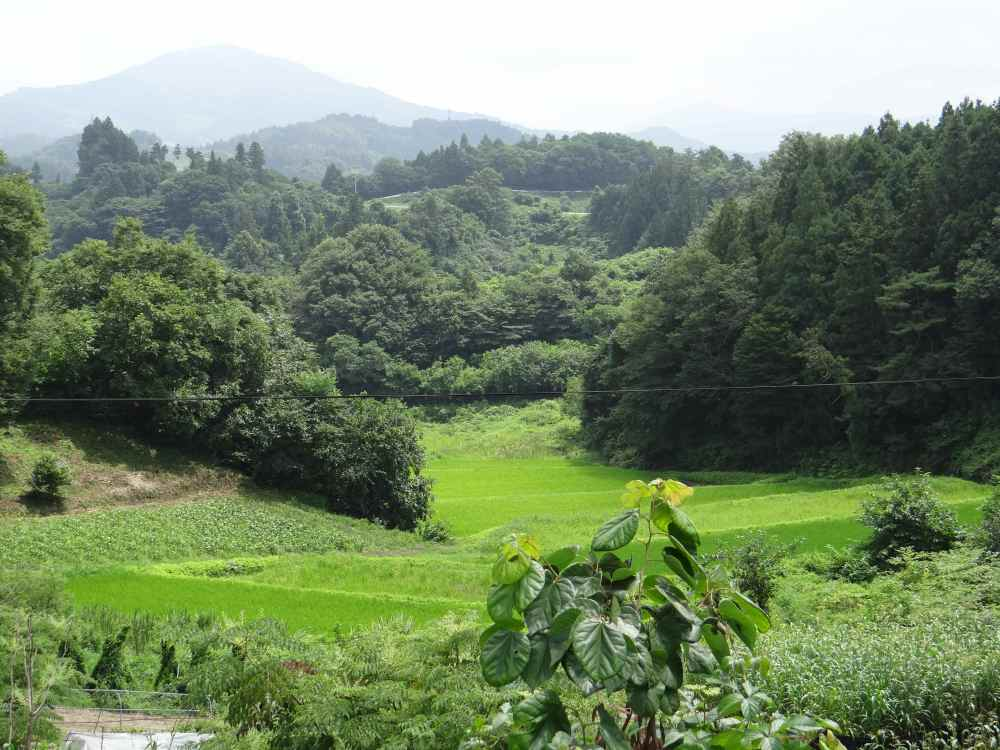 The Landscape of Towa